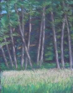 Erlen im Morgenlicht, 64 x 49 cm